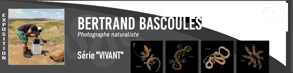 Bertrand Bascoules